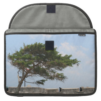 St Augustine Fort Tree  Castillo de San Marcos Sleeves For MacBook Pro