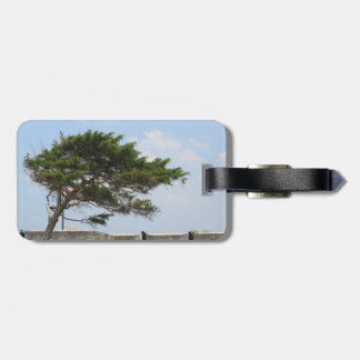 St Augustine Fort Tree  Castillo de San Marcos Tag For Luggage
