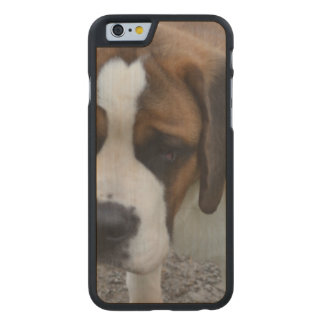 St Bernard adorable Funda De iPhone 6 Carved® Slim De Arce