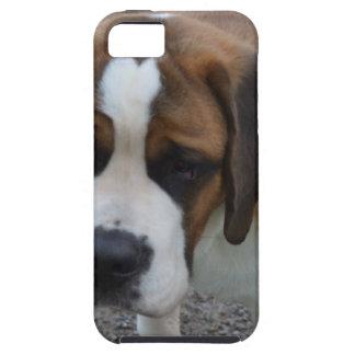 St Bernard adorable Funda Para iPhone 5 Tough