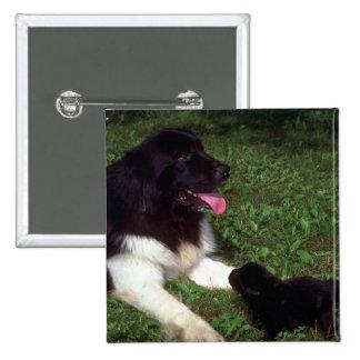 St. Bernard and pup Pin