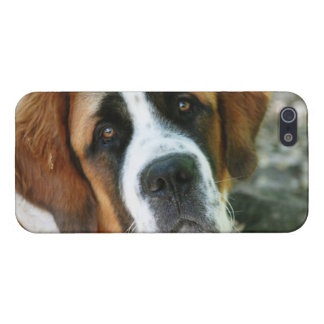 St. Bernard Cover For iPhone 5