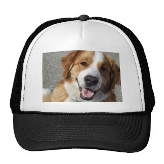 St Bernard Mix Happy Dog Mesh Hats