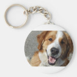 St. Bernard Mix Happy Dog Key Chains