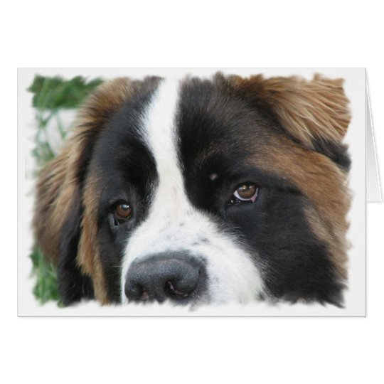 St Bernard Puppies Greeting Card