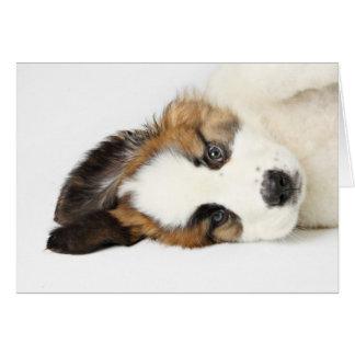 St. Bernard Puppy Greeting Cards