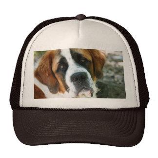 St. Bernard Trucker Hat