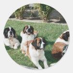 St. Bernards in the Yard Round Stickers