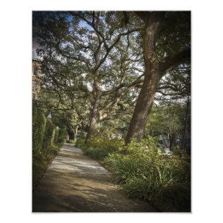 St Charles Live Oak Trees Photo Print
