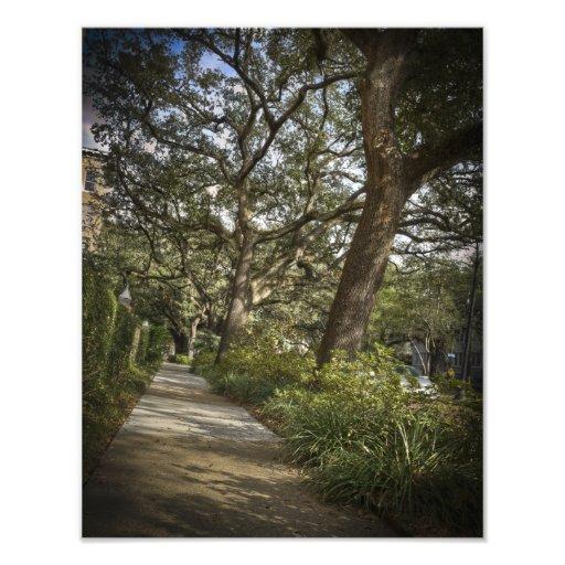 St Charles Live Oak Trees Photographic Print