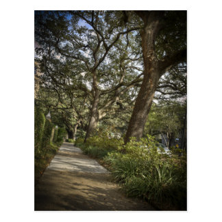 St Charles Live Oak Trees Post Card
