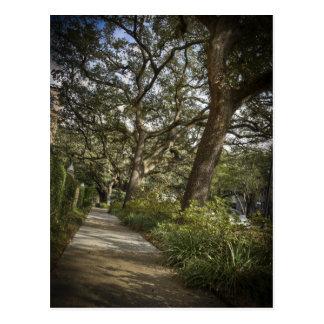St Charles Live Oak Trees Postcard