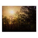 St Charles Parish Sunset Postcard