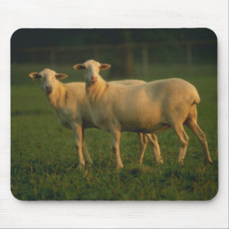 St Croix Hair Sheep Mouse Pad
