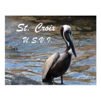 St. Croix U.S.V.I. Postcard