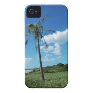St. Croix, USVI Palm Tree iPhone 4 Cover