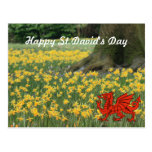 St. David's Day Daffodils Postcards