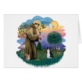 St Francis (ff) - Black and white cat Card