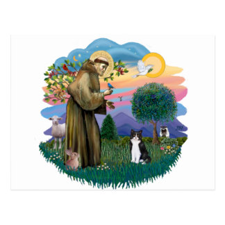 St Francis (ff) - Black and white cat Postcard