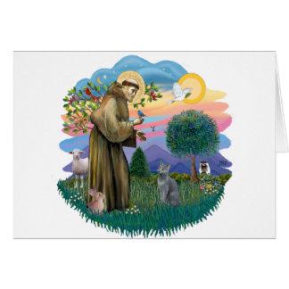 St Francis (ff) - gato azul ruso Tarjeton