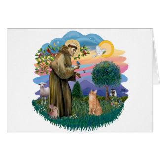 St Francis (ff) - Orange Tabby cat Greeting Card
