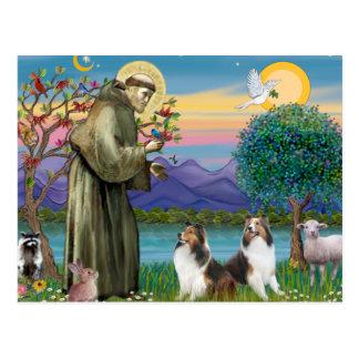 St Francis (w) - Dos Shelties (D&L) Tarjeta Postal