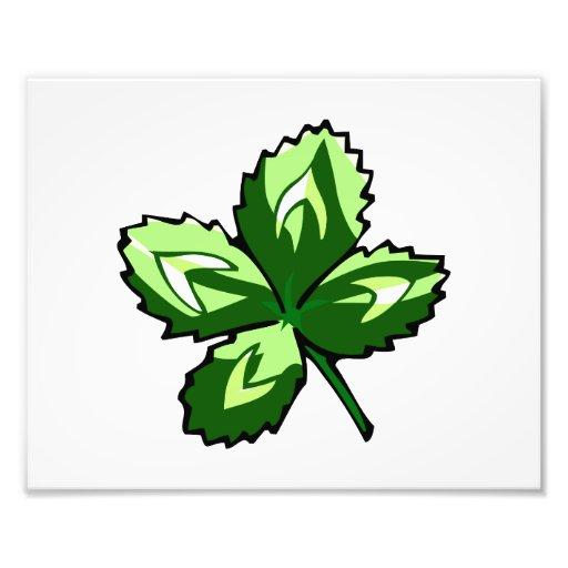 st jaggy pats.png del trébol de cuatro hojas cojinete