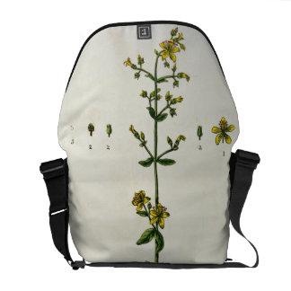 St John s Wort plate 15 from A Curious Herbal Messenger Bags