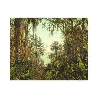 St. Johns River Florida 1898 Photo Canvas Print