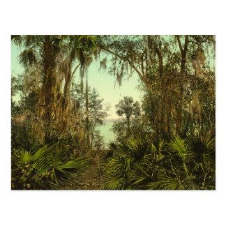 St. Johns River Florida 1898 Photo Postcard