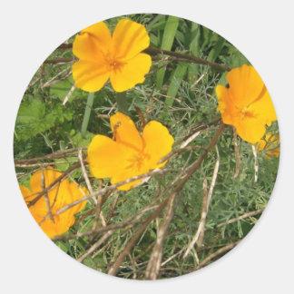 St John's Wort Blooming Classic Round Sticker