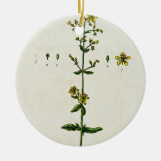 St. John's Wort, plate 15 from 'A Curious Herbal', Ceramic Ornament