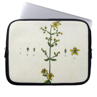 St. John's Wort, plate 15 from 'A Curious Herbal', Laptop Sleeve