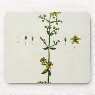 St. John's Wort, plate 15 from 'A Curious Herbal', Mouse Pad