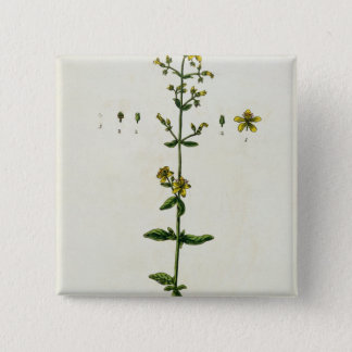 St. John's Wort, plate 15 from 'A Curious Herbal', Pinback Button