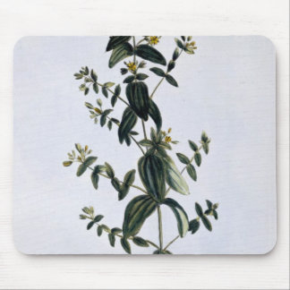 St. John's Wort, plate 62, from 'Collection Precie Mouse Pad
