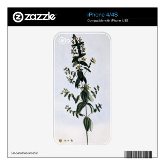St. John's Wort, plate 62, from 'Collection Precie Decals For iPhone 4S