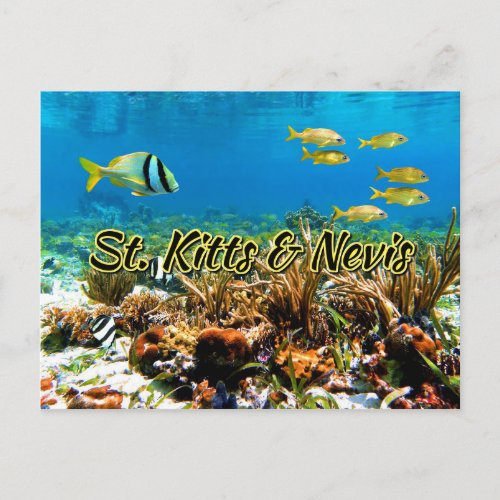 St Kitts  Nevis coral reef Postcard