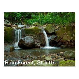 St.kitts Rain Forest Postcard