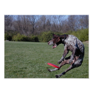 St. Louis Disc Dog Club - Founder Poster