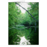 St. Marks River Greeting Cards