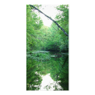 St. Marks River Photo Card