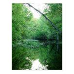 St. Marks River Postcard