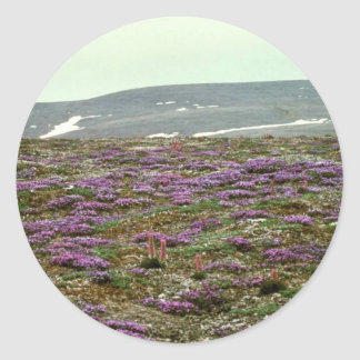 St. Matthew Island, Blackish (or Purple) Oxytrope Round Sticker