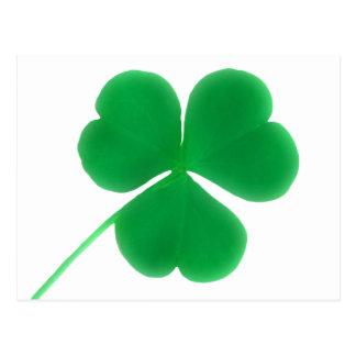 St. Patrick's Day Green Clover Postcard
