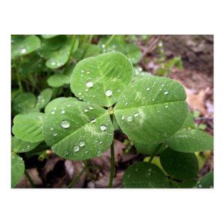 St Patrick's Day Shamrock Postcard