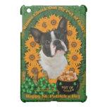 St Patricks - mina de oro - Boston Terrier