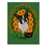 St Patricks - mina de oro - Boston Terrier Postal