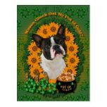 St Patricks - mina de oro - Boston Terrier Tarjetas Postales