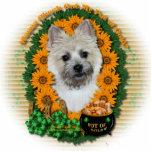 St Patricks - mina de oro - mojón Terrier TeddyBea Escultura Fotográfica